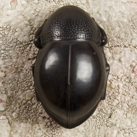 SOUTH AFRICAN DARKLING BEETLE