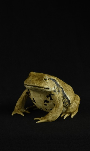 TOAD I